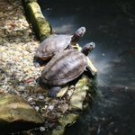 """""""It's not where you are in life- it's who you have by your side."""" #WeHelpPeople #Sarasota #turtles PC:@imtee https://t.co/eR5ByLx26c"""