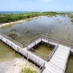 Hoy es el Día Internacional de la Defensa del Ecosistema #Manglar #Cozumel #ProtegeTuManglar @UNESCOMexico https://t.co/gxoghwyY5T