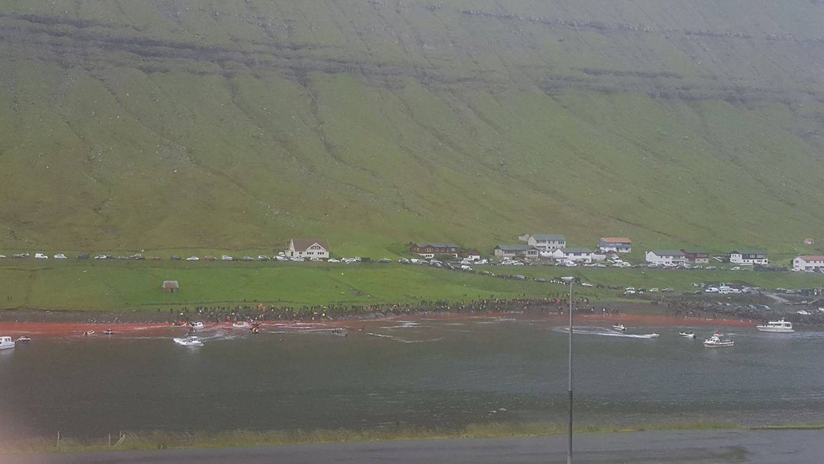 RT @seashepherd: 120 whales killed in #FaroeIslands  The whale killers are currently pursuing remainder of the pod. Updates to come. https:…