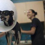 Aprobada ley de bienestar animal: penas por maltrato serán hasta de 3 años de cárcel https://t.co/ZnxP1bp6Ad https://t.co/cGCvtsSiDo