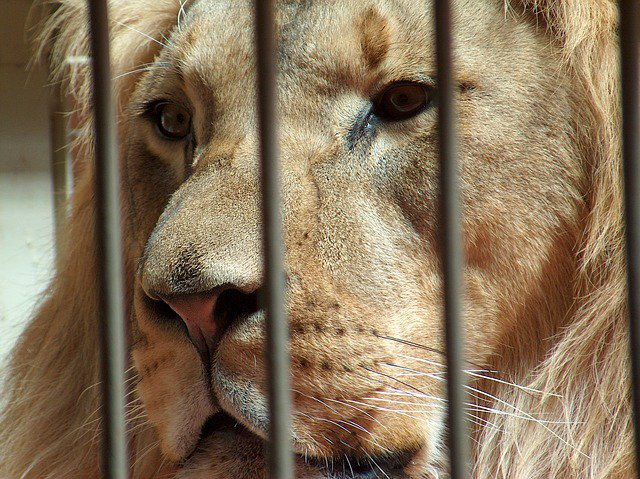 RT @peta2: Why do humans want to cage the world's beauty?  #BoycottTheZoo https://t.co/fTjEaMbk0E