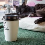 Now you can own #Torontos first cat cafe https://t.co/usxdRnOr9K https://t.co/F0CmrrxTtB