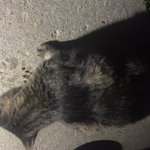 Did anybody lost a cat? Sheppard and Bayview area. #Toronto #cat #Lost #lostcat https://t.co/1IzgXexoiA