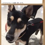 #緊急SOS #拡散希望 #大阪市 #岸和田サービスエリア #迷子犬 7月26日 岸和田SAより逃走。 土地勘ありません。 追いかけると逃げます。 無事の保護にできる全力のご協力を!…https://t.co/VWaPmZgOjO https://t.co/yAlvG2WEOa