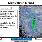 Radar shows a significant mayfly hatch late this evening, beginning shortly after 9 pm. #mnwx #iawx #wiwx https://t.co/0TXS8tgyvG