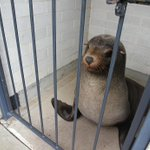 Australian woman gets fright of her life in cemetery toilet - thanks to napping seal https://t.co/Akc6PL9LNc https://t.co/HO1VF8gW2u
