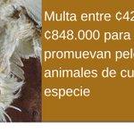 16 obligaciones y castigos que introduce la nueva Ley de Bienestar Animal https://t.co/OhfJezph1t https://t.co/4zp4hJRPhJ