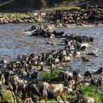 A6 The great wildebeest migration, its happening now in the Masai Mara in #Kenya & Serengeti #Tanzania. #travchat https://t.co/aO9gJ3VIJI
