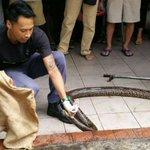 Look what was found in a drain near an Ang Mo Kio coffee shop https://t.co/AkdBBG2qOc https://t.co/Kytl87kB20