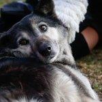 En el Día Internacional del Perro Callejero lanzan sitio web para adoptarlos https://t.co/6YGChjbgFi https://t.co/JGtAD8ywBQ