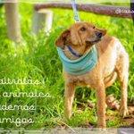 Hola tí@s Los peludos Canil #LaSerena somos muy amistosos.Podemos ser parte de tu familia? @LaSerenaIV @SOS_Animales https://t.co/YSdOZNlTau