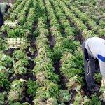 Trabajadores obligados a prestar servicios en el sector agroalimentario       https://t.co/AHi8h8H4PH https://t.co/MewUJE76LM