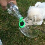 Tämä italiasta ostettu korkki josta koira voi juoda matkoilla on paras keksintö sitten tuulettimen. https://t.co/NmmRNqiVj9