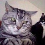 quando você tá conversando no whatsapp e alguém atrás de você fica tentando ler https://t.co/zU1eWK4Oc4