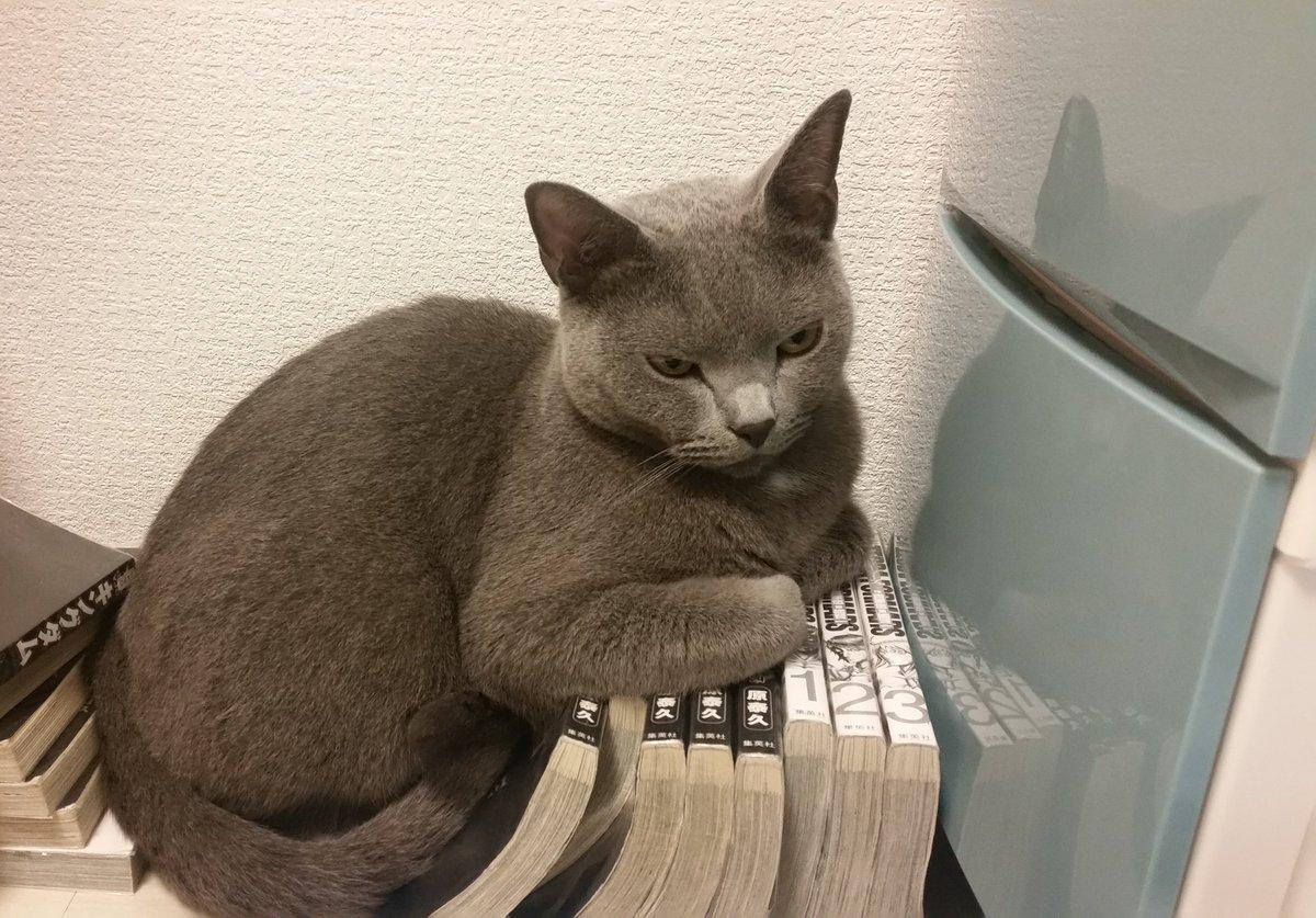 なんとか読み終えて「さて次の巻を読もう」と思ったら、 次の巻のほうを占領されてて、続きが読めない。 …