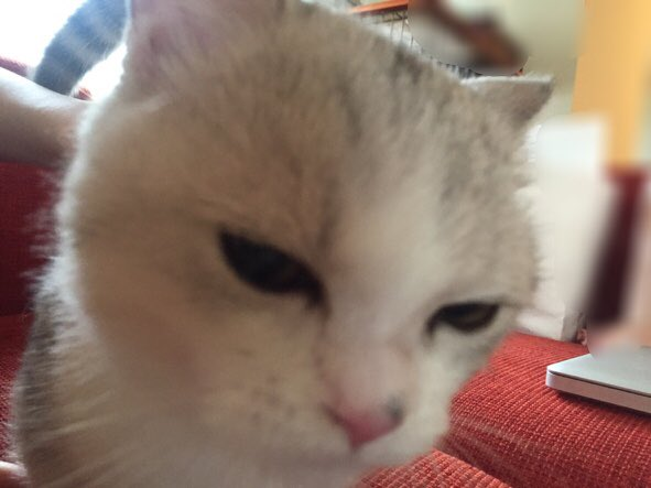 【指原】マンチ・カン太郎&ミヌエット五郎応援スレ★40【猫ーズ】 ->画像>453枚