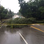 Trees are down in Hyde Park near Dana and Torrence Parkway. Lights are reportedly back on (Photo: Mike Williams) https://t.co/Phiawe01RK