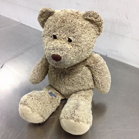 Help us find Bear's owner! Bear was left in security at around 6am this morning. Please RT. https://t.co/fN1lbZ0P5U