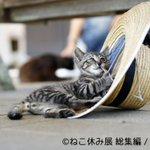 500RT:【癒されに】日本橋タカシマヤで「ねこ休み展 総集編」開催 https://t.co/auMAcdt8Af プロやアマ問わず猫クリエイターが集結する合同写真&物販展。人気猫、水が飲めない猫とコラボした6メートルの超巨大… https://t.co/FQCdEmc8Ac