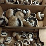 Very grateful for donation from @WCMushrooms of wonderful portobello & cremini mushrooms! #LdnOnt #CommunityHarvest https://t.co/2HtCME8zun