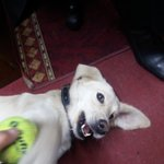 Venga! necesita un hogar cachorro jugeton cariñosointeligente #Buscadog #MuchoGusto te necesita cambiar su vida🐕💔😔RT https://t.co/ECAPXKMnIv
