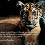 Tigers are still being mercilessly killed! Lets all pledge to save this beautiful animal! #InternationalTigerDay https://t.co/BbhswS44NY