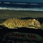 RT @sudarsansand: Today is #InternationalTigerDay ,My SandArt with message