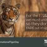 #InternationalTigerDay For the TIGER we must UNITE, so they dont FADE out of SIGHT image: @rohitvaarma https://t.co/gXQ8uxnoke