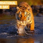 Tigers are our national pride, lets all come together to #SaveOurTigers from becoming extinct.#InternationalTigerDay https://t.co/i57WS1lekg
