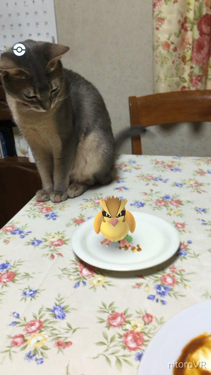 ポッポを狙う飼い猫 https://t.co/FdBrHN8D3f