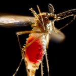 Mosquito Bites Are Giving People Zika In Florida https://t.co/61IExC55uL https://t.co/cSifsitPTh