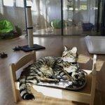 #Insolite : le premier hôtel pour #chats vient douvrir à #Marseille https://t.co/BAqC5WxNao https://t.co/ohKDZeBOLP