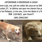 #BuscandoALula Si la encuentran, resguárdenla y hablen por favor! @VivoEnCancun @MarcrixNoticias @QuienTVCancun https://t.co/KgXgxRBAQv