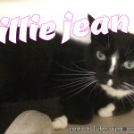 BILLIE JEAN was abandoned by owner who said she is too old. Shes 10. Save her at lifesaving@acctphilly.org https://t.co/Ned56dpLwH