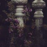 """""""يا مُغرَمًا بِاقتناءِ الوَردِ في شَغفٍ  لا تزرَعِ الوردَ إن أعيَتكَ سُقياهُ"""" . . * 🌸🕊 https://t.co/PlS0Zo4FxG"""