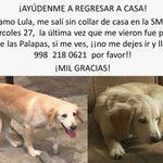 Aún #BuscandoALula #perro #perdido #Cancún RT porfa🙏@VivoEnCancun https://t.co/zENm8AqbqE