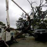 Equipo de Alcaldia de Araure rehabilita vía púbica afectada por árbol caído en Araure @nubiaccandanga https://t.co/QQELrJ6Ul3