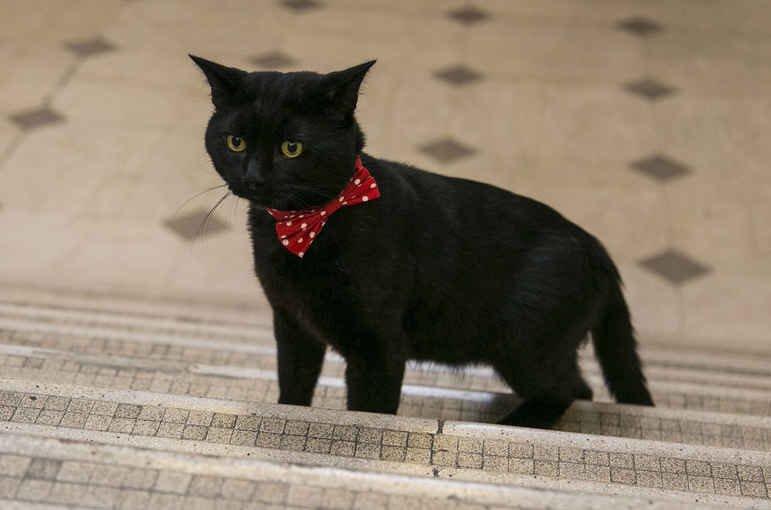 イギリス首相官邸のラリー、外務省のパーマストンに続き、財務省から黒猫のグラッドストーンがデビュー  …