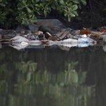 Mar de lixo flutua na Baía de Guanabara, onde haverá provas da Olimpíada https://t.co/589SeVrN3Q https://t.co/7cQjyDOml0