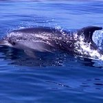 Un delfino gioca in laguna. Il bellissimo incontro tra una famigliola e il simpatico cetaceo https://t.co/oZIF4Fn7VC https://t.co/rce4ACn5vk