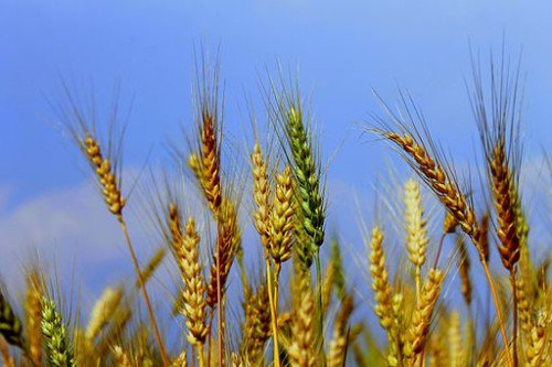 A Blessed First Harvest https://t.co/UHy497h4kX #pagan #Lughnasadh #Lammas https://t.co/cZLhOXSOmr