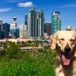 @nenshi I think Sofie loves #yyc as much as you do! #bestmayor #sofieselfie https://t.co/iKs24rqlGT