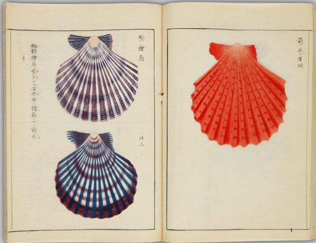 少しでも涼感を感じてもらうために、海関係の画像を探してみました。画像は貝類605品の彩色図を7類に分…