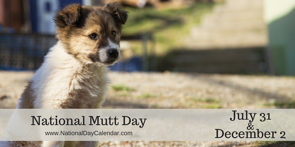 RT : They might be mutts, yet they're adorable! #NationalMuttDay aAnFwUJzf3