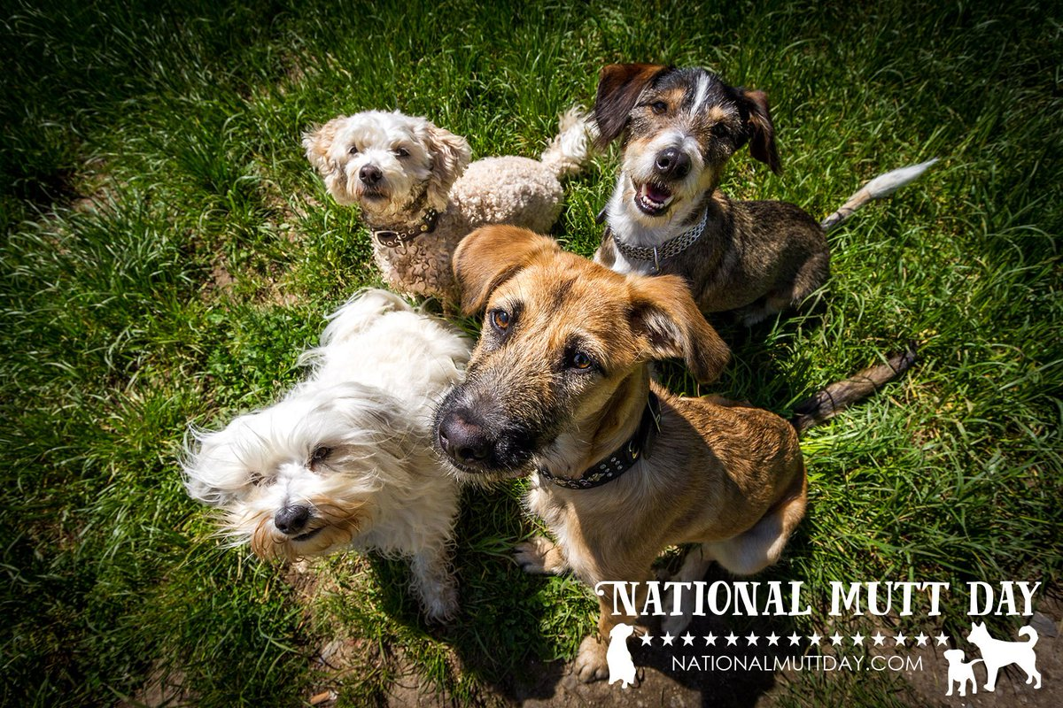 HAPPY NATIONAL MUTT DAY!! Celebrate your mixed breed furry ball of love & adopt if u can! #nationalmuttday #muttday https://t.co/BAp5KPCWL8