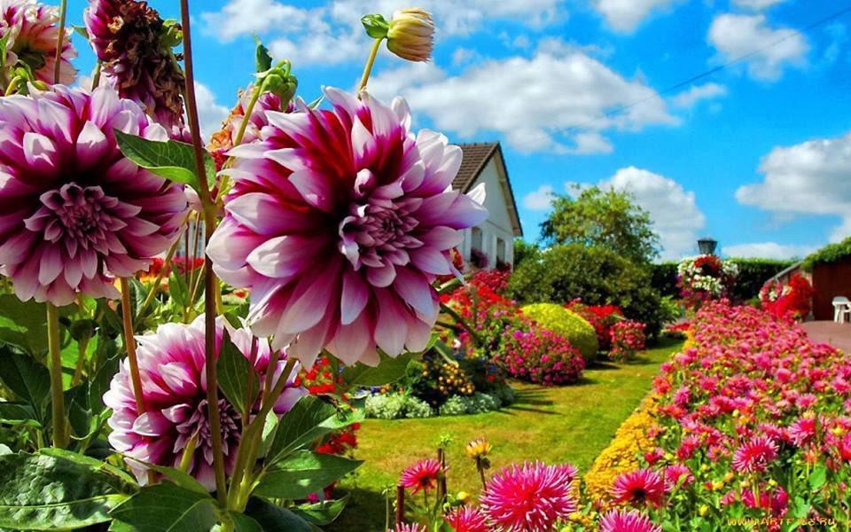 Найти цветок по садовый