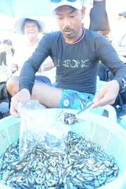 スク水揚げ、奥武島で今年も大漁 #okinawa 沖縄県南城市の奥武島でスク漁が始まり、島の海人たち…