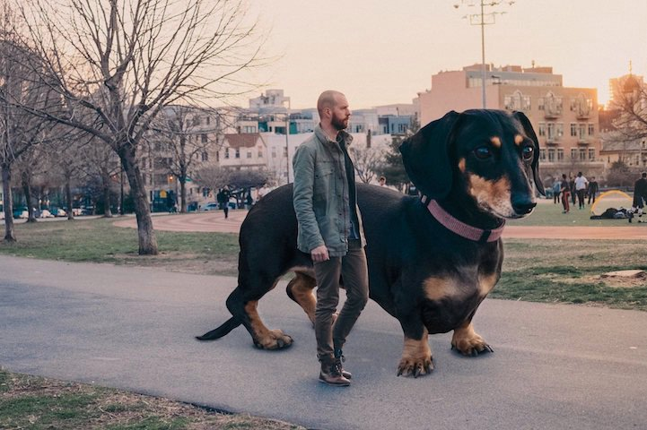 Guy Photoshops tiny dog to show how big she thinks she is. https://t.co/NdyZFVsnkJ