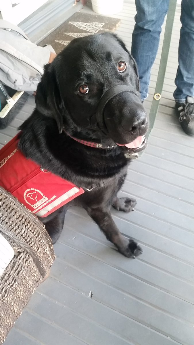 3 @BeckTaxi & @crowntaxiTO drivers refused service to my son and his Dog today. Illegal AND douchey. @LFCDogGuides https://t.co/fyZuOuWV7K