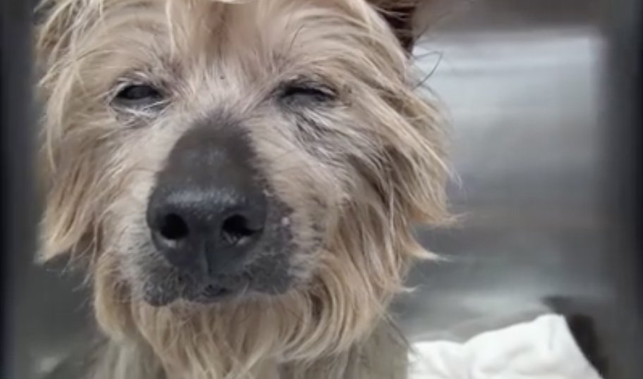 "DOG IN NEED: Shigua's family gave him up as ""too old"" - he's at Carson shelter & at risk. https://t.co/nXPtoYQNsN https://t.co/gwCHiQnWKa"